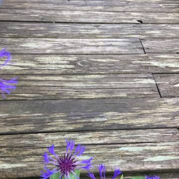 Även i den gråaste Planka , kan det växa Blåklint ...