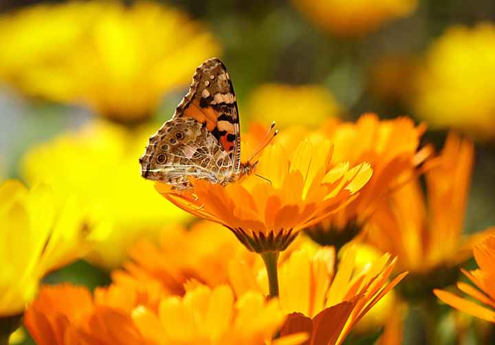 butterfly perched on the yellow petaled flower during daytime