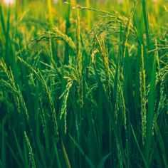 Photo by Ashutosh Sonwani on Pexels.com