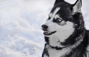 dog-2414477_1920