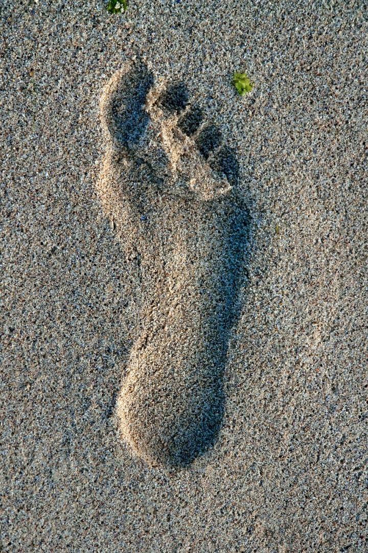 lotus-feet-of-the-guru-2541546_1280