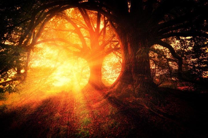 trees-2562083_1280