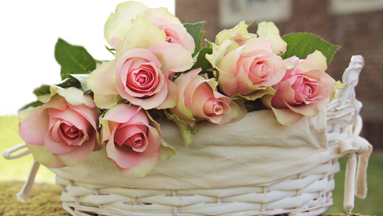 bloom-blossom-flora-415490